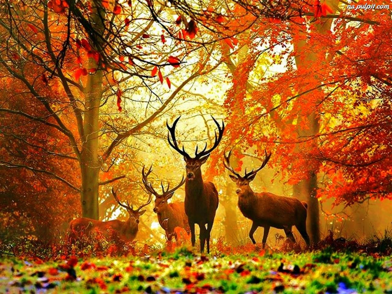 Stado p on cego serca nasze tereny - Free deer hunting screensavers ...